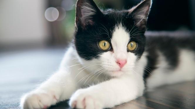 Beautiful_Cat_Portrait_uhd